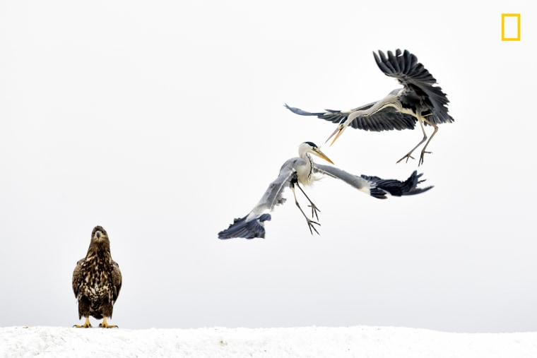 Image: 3rd Place, Wildlife