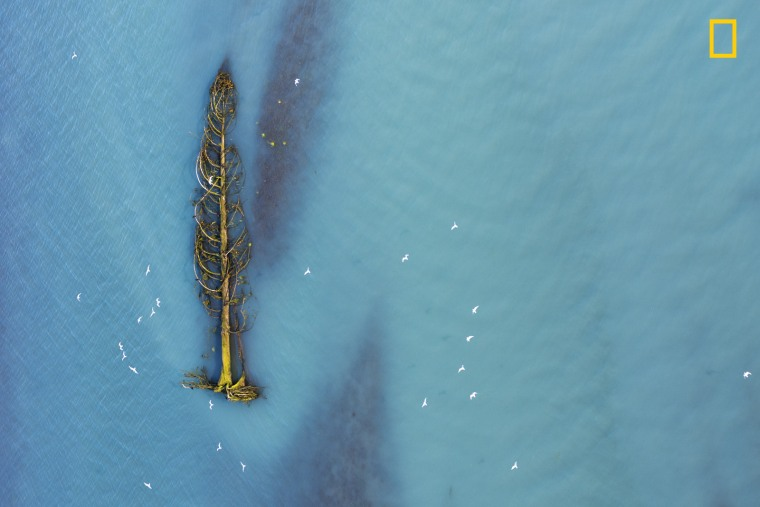 Image: Honorable Mention, Aerials