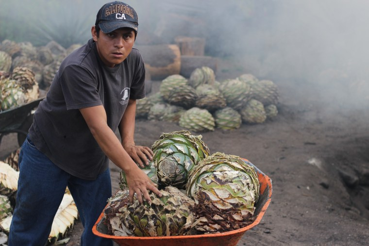 Erick Hernandez Garcia loads the stripped agave hearts onto a wheelbarrow before tossing them into the circular smoking pit