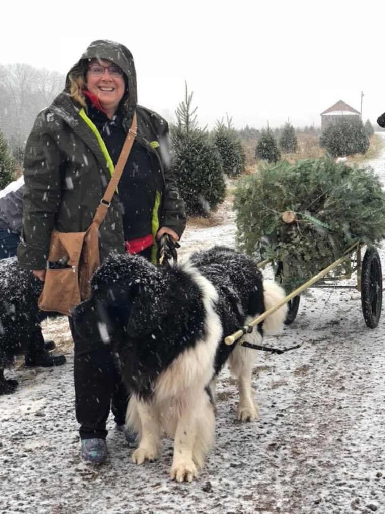 Christmas tree farm has big strong (happy) dogs to help carry your tree to your car.