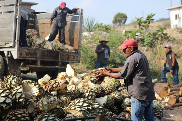Workers in the San Baltazar Guelavila factory prepare to smoke the agave hearts after the leaves have been cut. Leodegario Hernandez Martinez begins arranging the hearts in a circular pit for smoking.