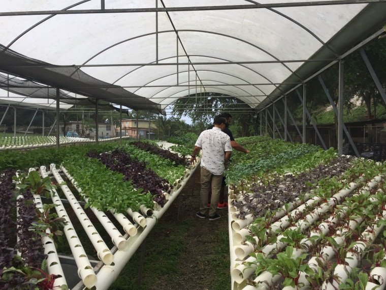 Chef Jose Mendin checks out the produce at Frutos del Guacabo, in the town of Manati, PR., a farm that sources many of the ingredients for his restaurant, PB Ysla.