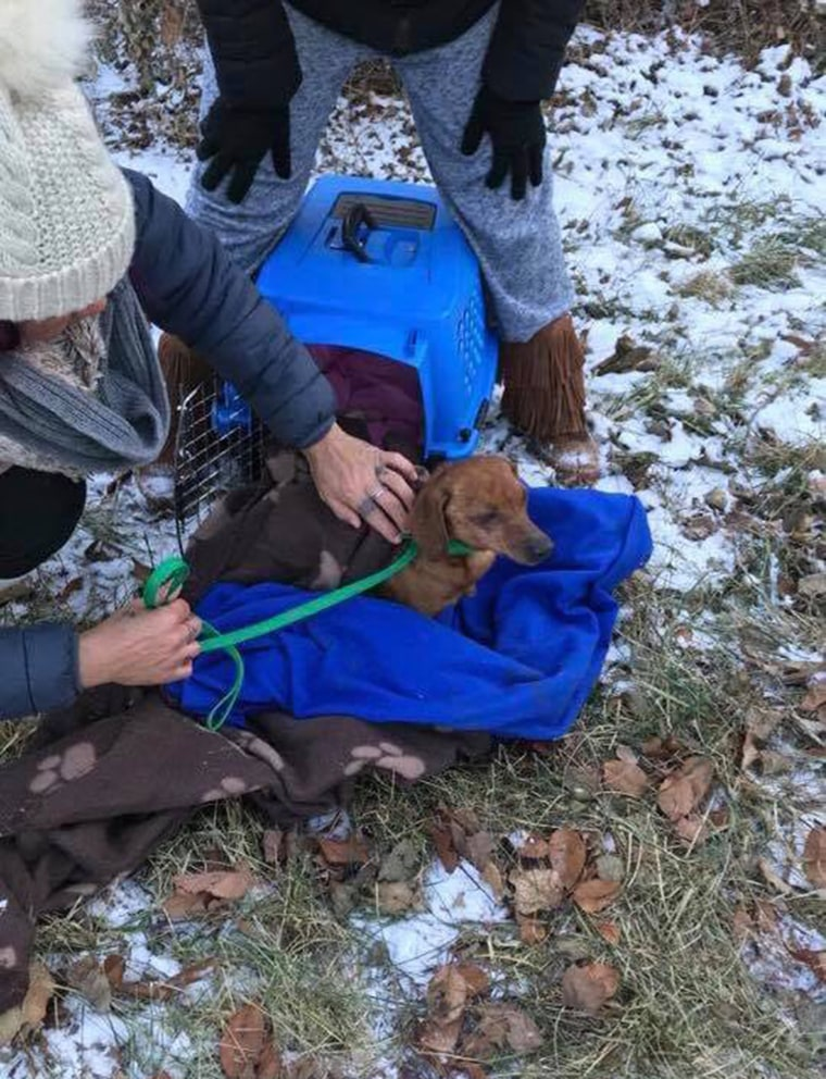 Dog left in bag in the woods is rescued