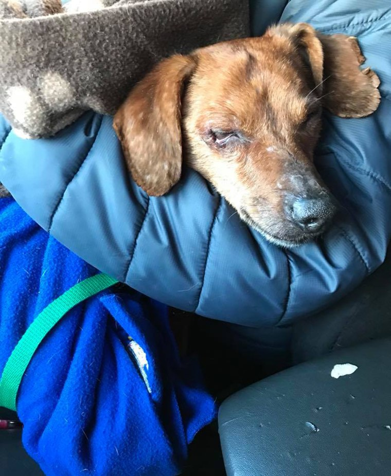 Dog abandoned in a bag in the woods is rescued
