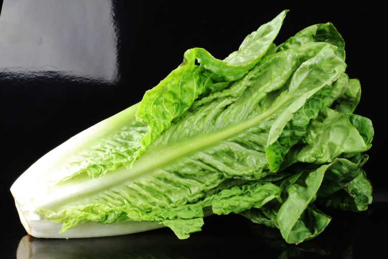 Romaine lettuce on a black background (Lactuca sativa L. var. longifolia)