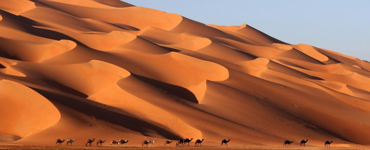 Image: Camels walk across the Liwa desert