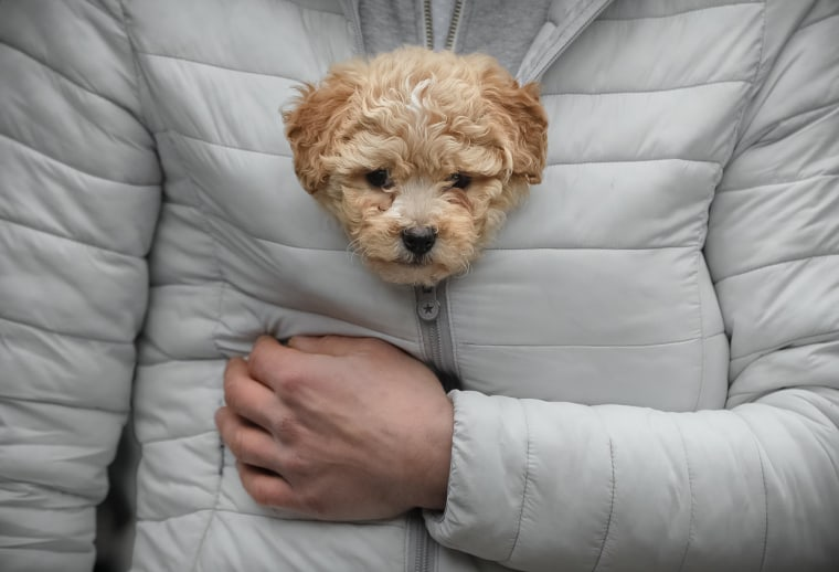 Image: A man keeps a puppy warm in his jacket while watching a New Year's parade