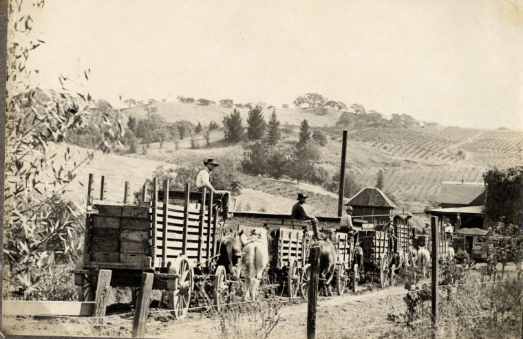 Workers at the historic Fountaingrove Winery owned by Kanaye Nagasawa, one of the first people of Japanese descent to immigrate to the U.S.