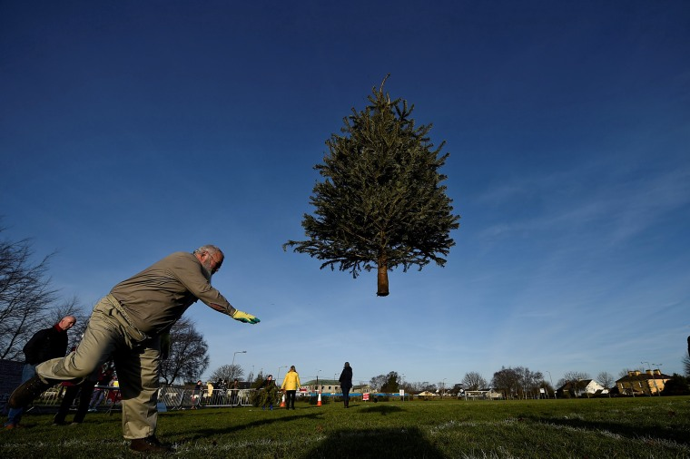 Image: A man participates in a Christmas tree throwing competition, in the County Clare town of Ennis