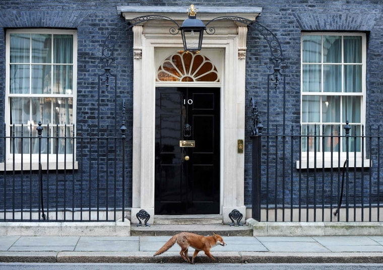 Image: A fox runs past the entrance to 10 Downing street in London