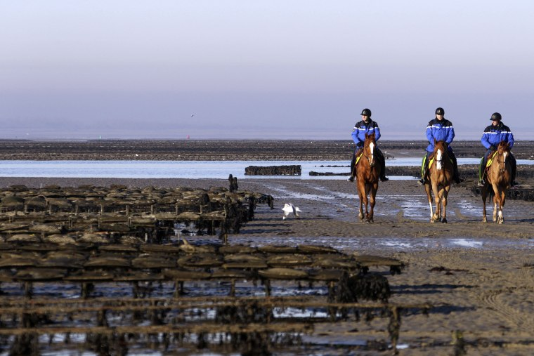 Image: Oyster farms