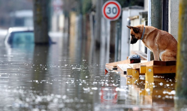 Image: Dog is seen at the entrance of a house in the flooded residential area of Villeneuve-Saint-Georges
