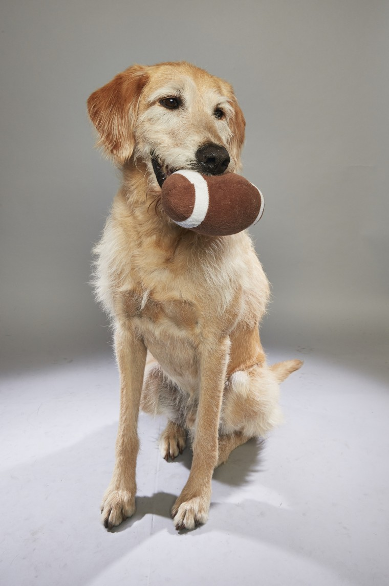 First-ever 'Dog Bowl' is furry Super Bowl for older pooches - photo#20