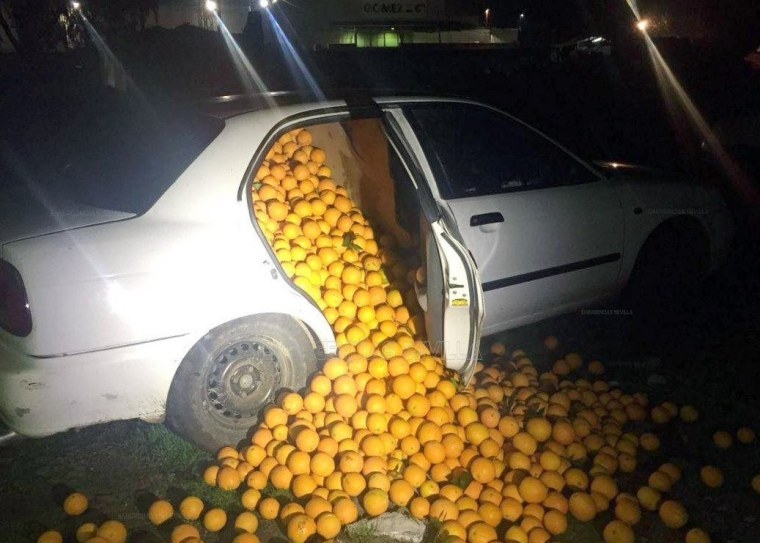 Image: Five people are arrested after stealing 8,000 lbs of oranges in Seville, Spain