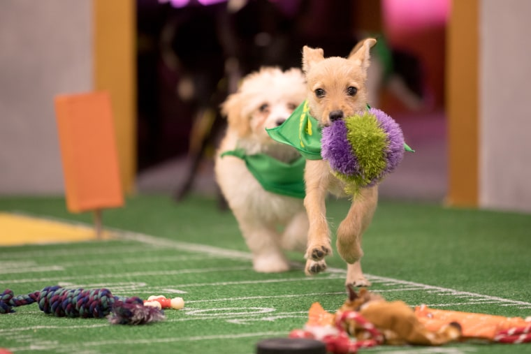 Image: Puppies take the field for Puppy Bowl XIV.