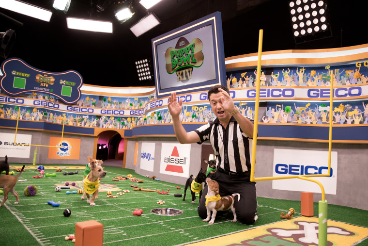 Image: Referee Dan Schachner takes the field during Puppy Bowl XIV.