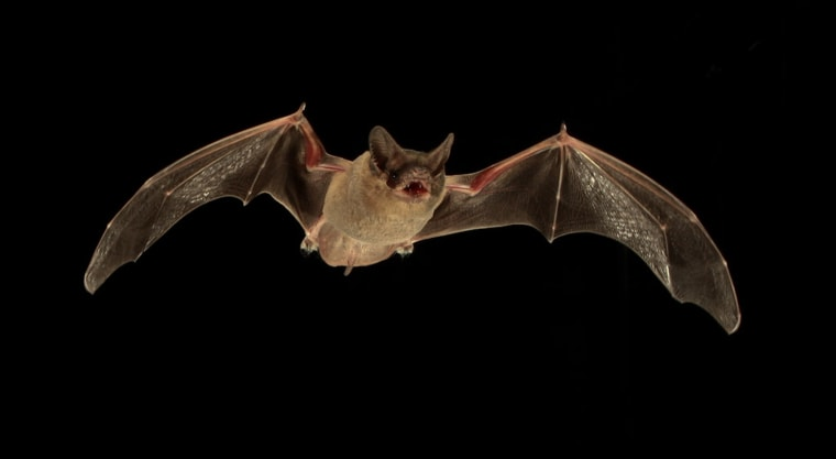 Image: Bat