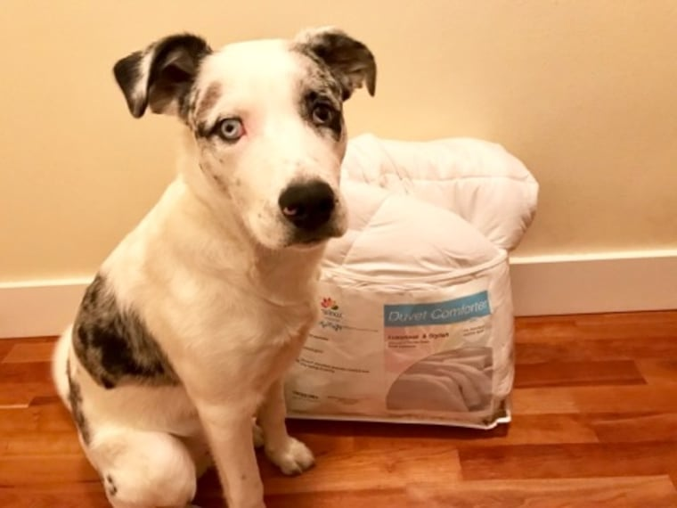 Equinox alternative comforter in package with dog for scale