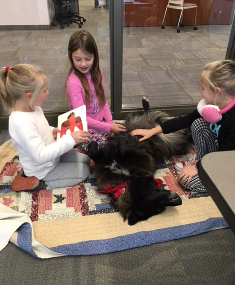 Sad library dog attracts kid readers