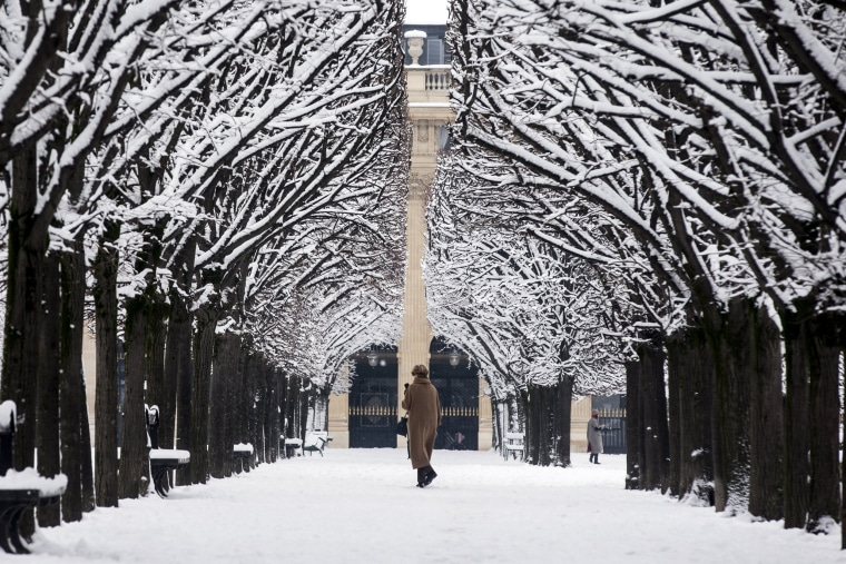 A woman walks between trees at the Palais Royal Park in Paris on Feb. 7.