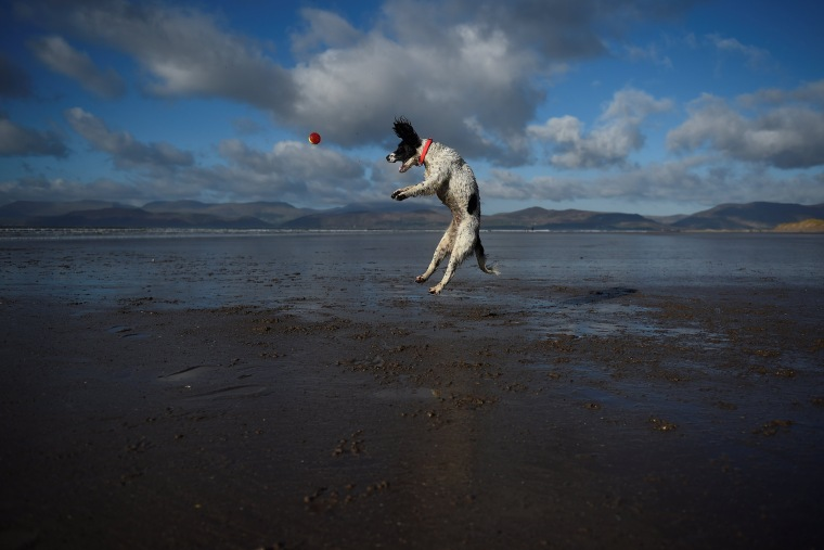 A dog jumps into the air to catch a ball along the beach near the County Kerry village of Rossbeigh, Ireland, on Feb. 4.