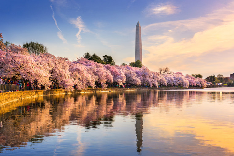 Washington DC in Spring