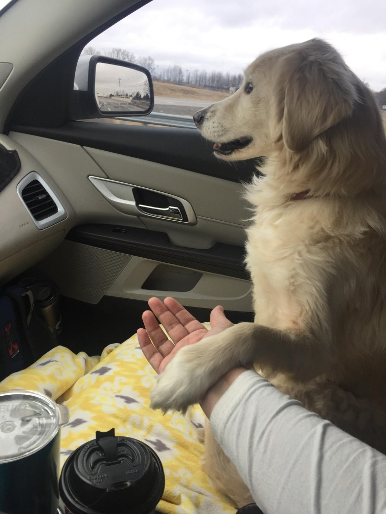 Grateful dog holds rescuer's hand on car ride home