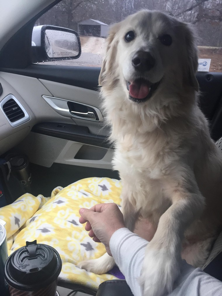 Grateful dog holds rescuer's hand on car ride home.