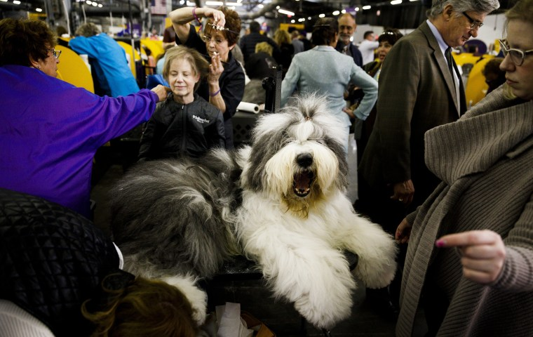 Image: Westminster Dog Show