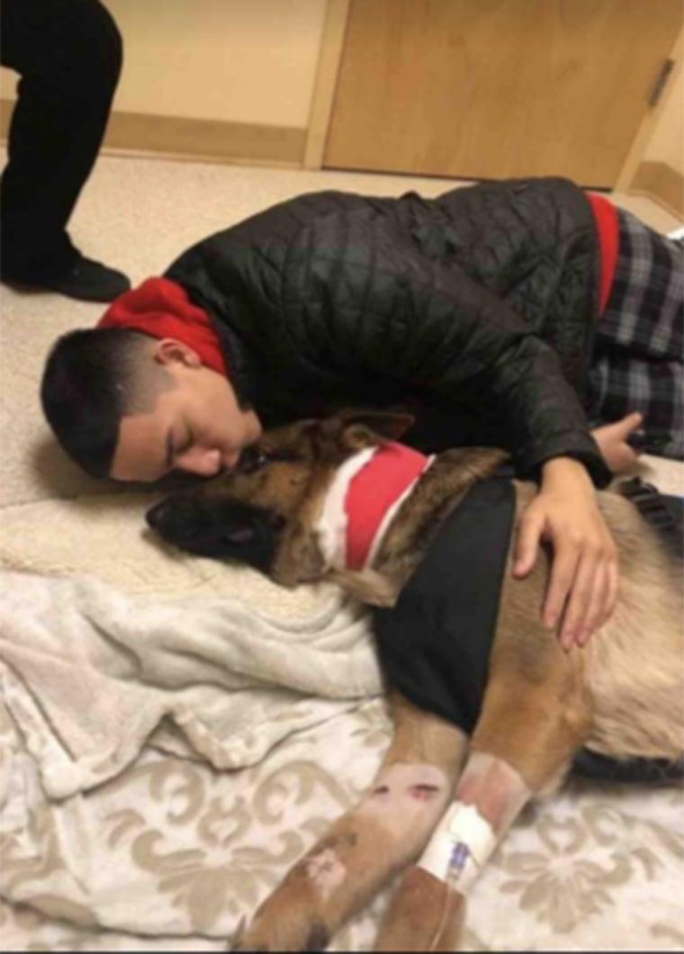 """""""Hero dog"""" shot while saving owner"""