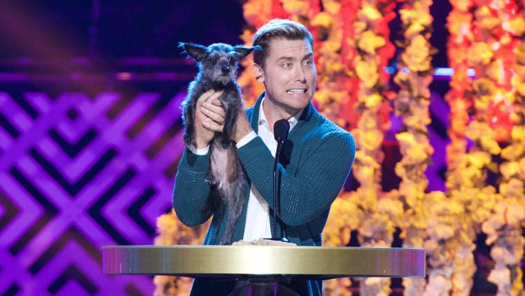 The World Dog Awards - Show