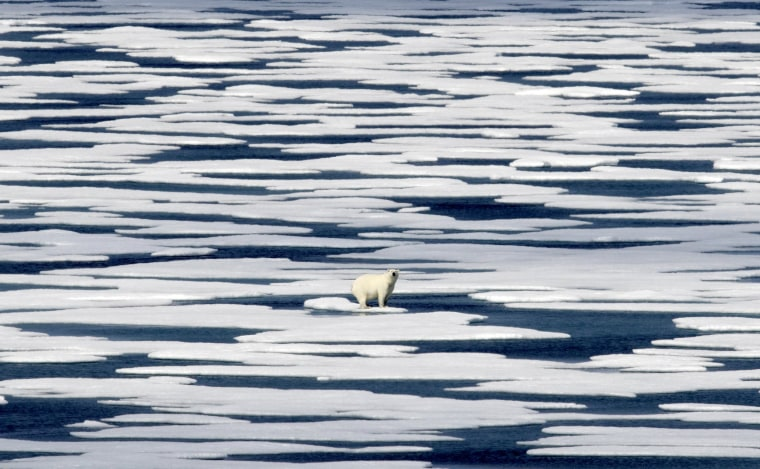 Image: A polar bear stands on the ice in the Franklin Strait in the Canadian Arctic Archipelago