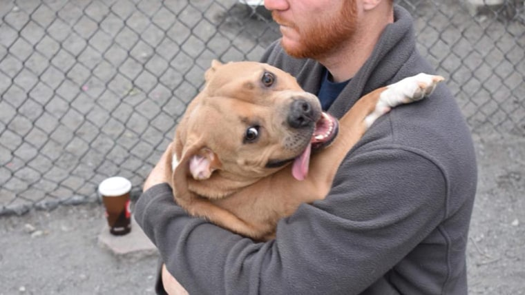 """Dog returned to shelter for being """"too nice"""""""