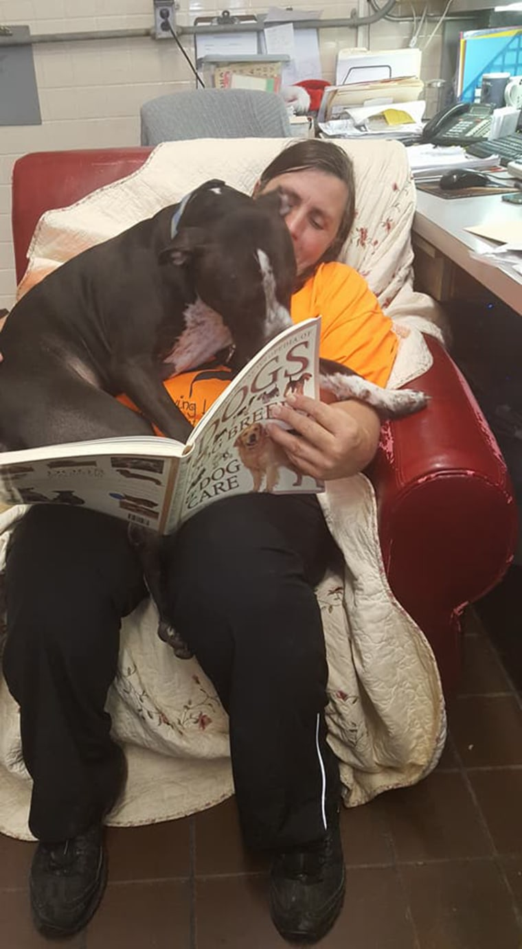 Shelter dogs get comfy chairs to make them feel at home
