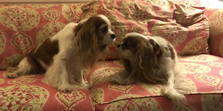 Dog doppelgangers