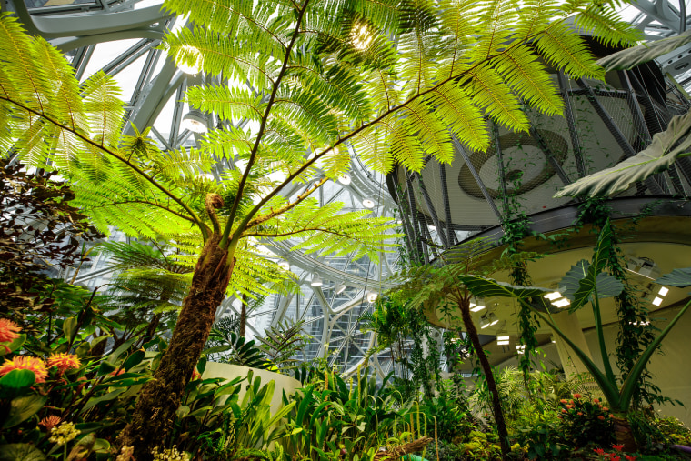 Image: More than 40,000 plants, most from cloud forest ecosystems, live within Amazon's Spheres in Seattle