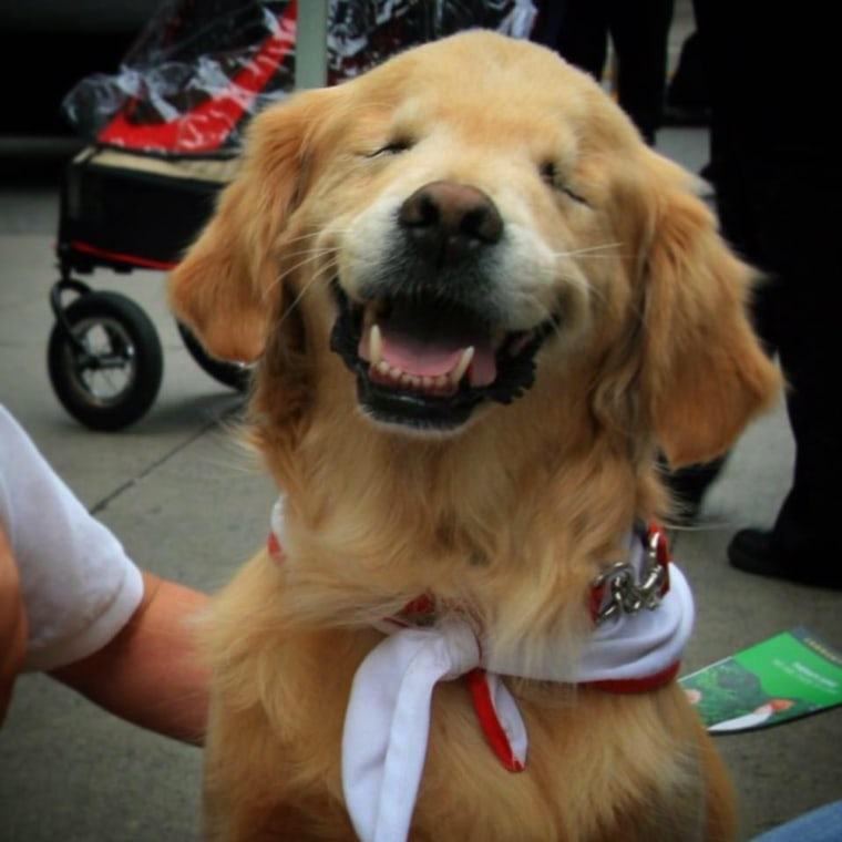 Smiley the blind therapy dog's beautiful legacy is living on.