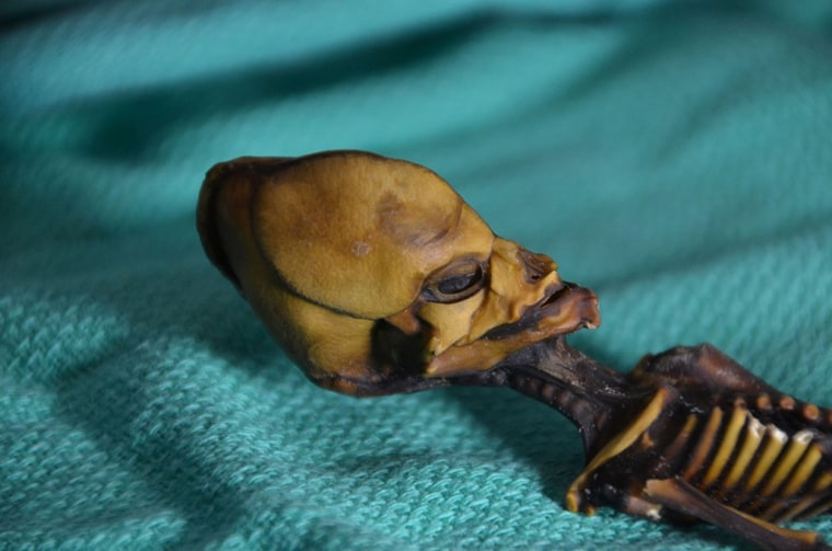 Image: The head of a 6-inch skeleton nicknamed Ata