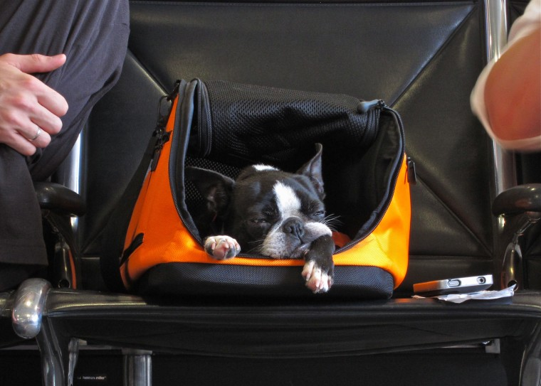 Image: Dog in carry-on container