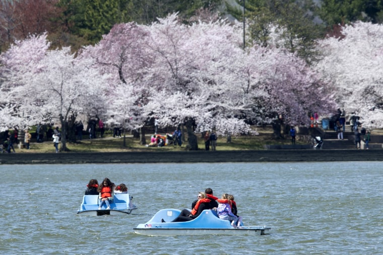 Image: 2018 National Cherry Blossom Festival