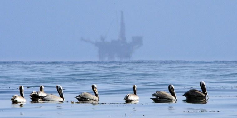 Image: Pelicans Oil Rig