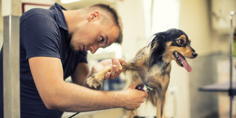 Pet owners need to do some homework before dropping their dog off at a groomer, experts say.