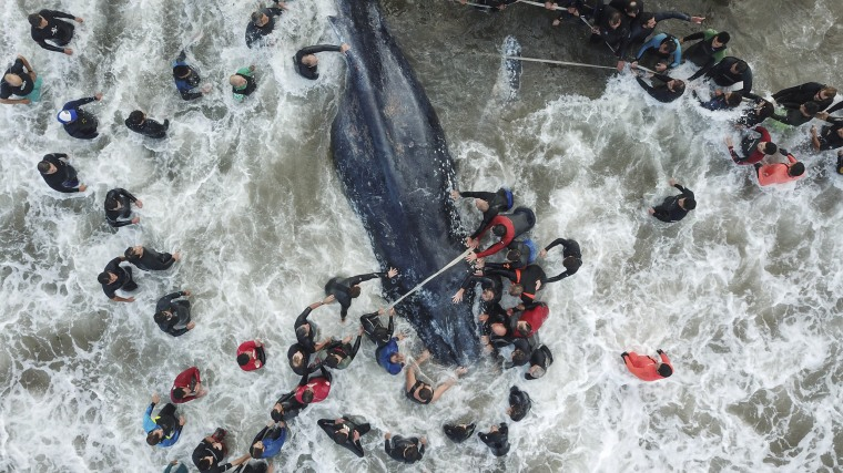 Image: A stranded whale in Mar del Plata, Argentina