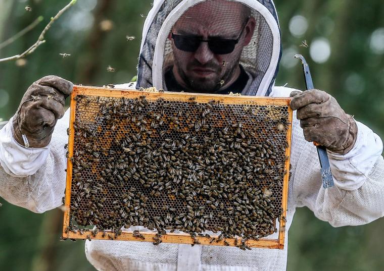 Image: Beekiping in Belgium