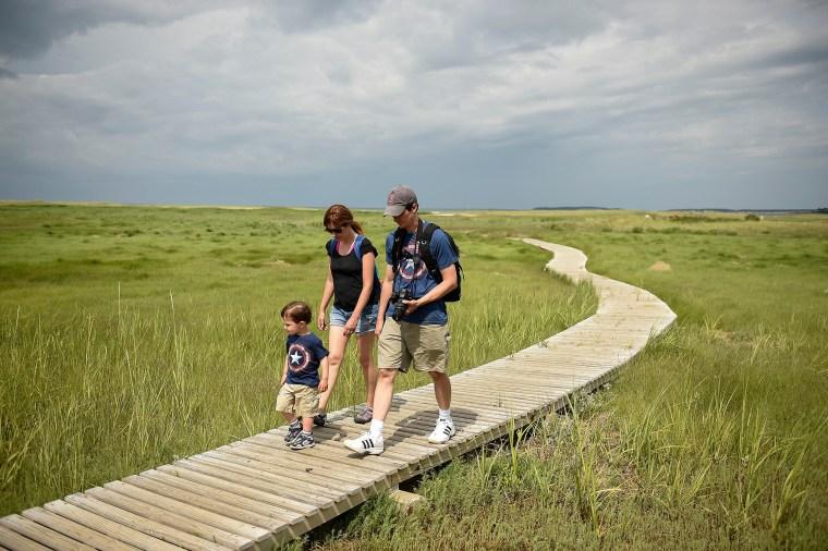 Take a stroll on the boardwalk trail through the Wellfleet Bay Wildlife Sanctuary, within the Mass Audubon on Cape Cod.