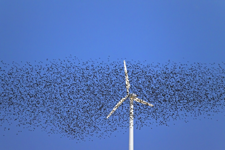wind energy takes a toll on birds but now there s help