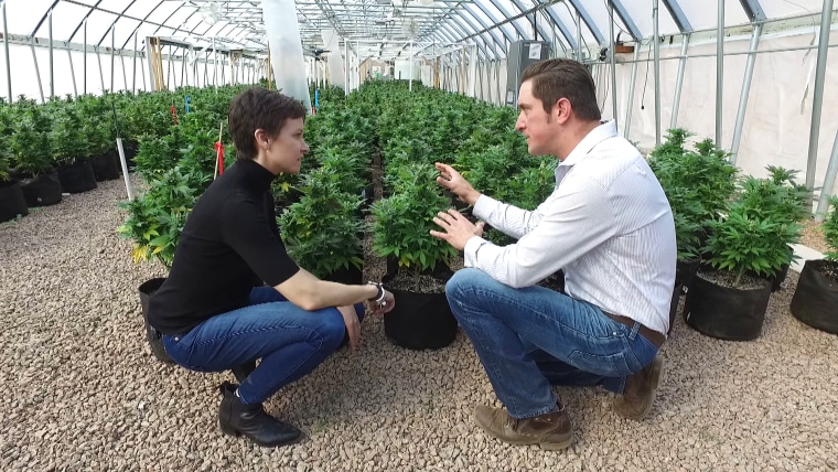 Image: Stephanie Gosk speaks to Joel Stanley of Stanley Brothers, a company run by a group of brothers who grow cannabis in greenhouses in the mountains of Colorado.