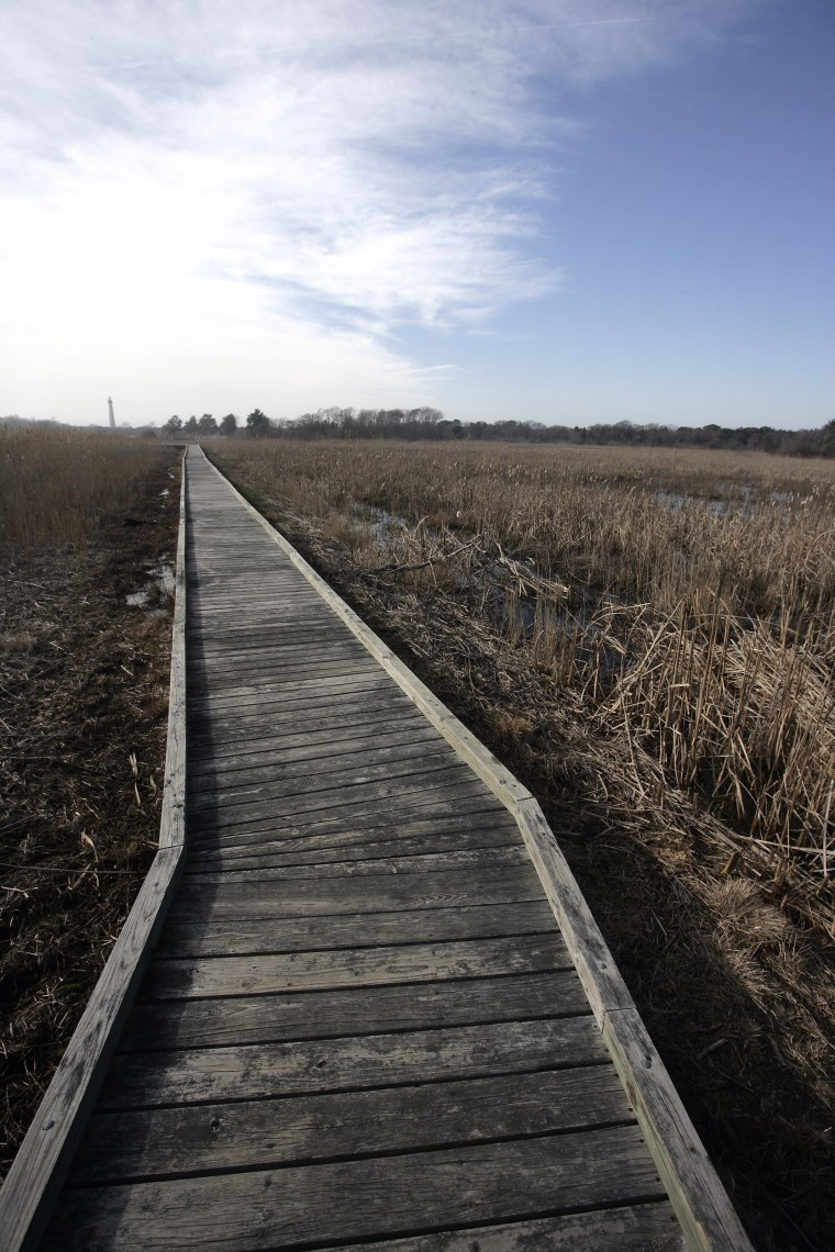 Walk the wooden boardwalk of the Cape May Wildlife Refuge.