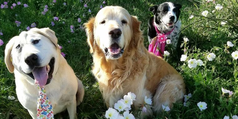 Beaux, left, loves his brother, Riley, center, and his sister, Scout.
