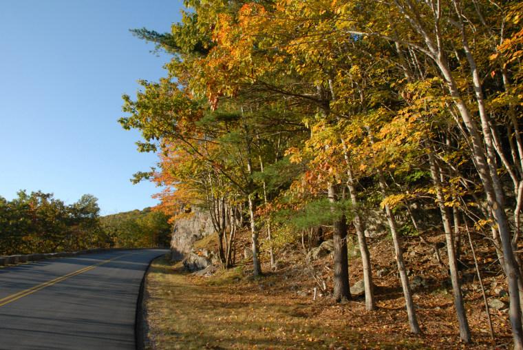 October sunlight along the Loop Road in Acadia